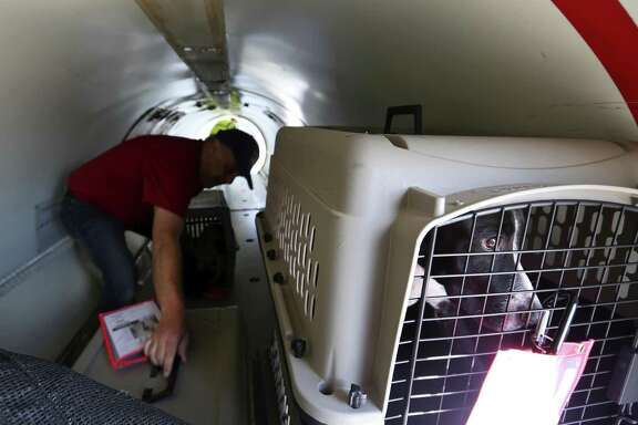 A dog looks out its kennel Tuesday morning, Aug. 29, 2017 after being loaded onto a Flight to Freedom plane headed for New Jersey. About 100 dogs from Animal Care Services were being transported by the not-for-profit organization to the New Jersey shelter to make room for the expected influx of animals displaced by Hurricane Harvey and it's remnants.