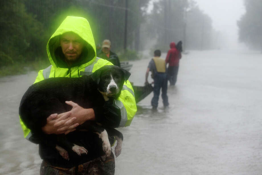 A rescuer carries a dog to safety from the flooding on Tram Road in Beaumont on Tuesday. Volunteers convened in the area with their boats to help rescue residents and their animals.  Photo taken Tuesday 8/29/17 Ryan Pelham/The Enterprise Photo: Ryan Pelham, Ryan Pelham/The Enterprise / ©2017 The Beaumont Enterprise/Ryan Pelham