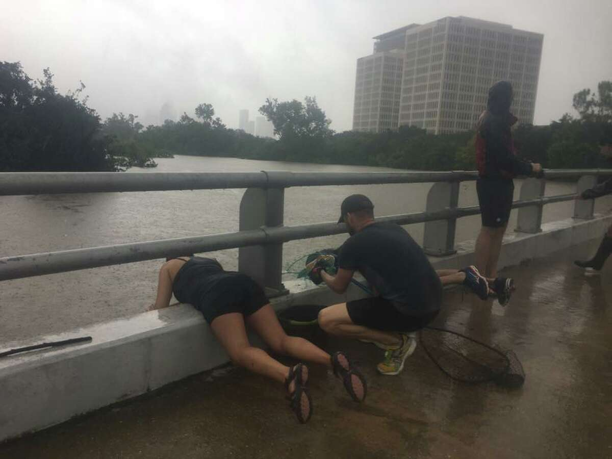 Alicia Plunkett, 21, rescues Mexican free-tailed bats from a roost under Waugh Drive as rains and runoff from Harvey cause Buffalo Bayou to rise.
