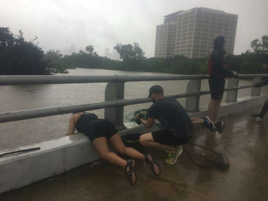 Alicia Plunkett, 21, rescues Mexican free-tailed bats from a roost under Waugh Drive as rains and runoff from Harvey cause Buffalo Bayou to rise.  Photo: Lindsay Dee / Facebook