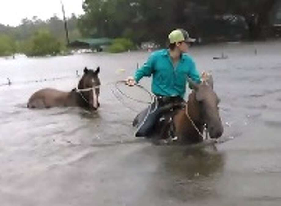 Tarkington native Chance Ward and his 17-year-old son, Rowdy Ward, have been swimming their horses into flood waters in Liberty County since Harvey's rains began, to rescue endangered livestock. Ward said they plan to keep going until they're no longer needed. Photo: Chance Ward/Facebook