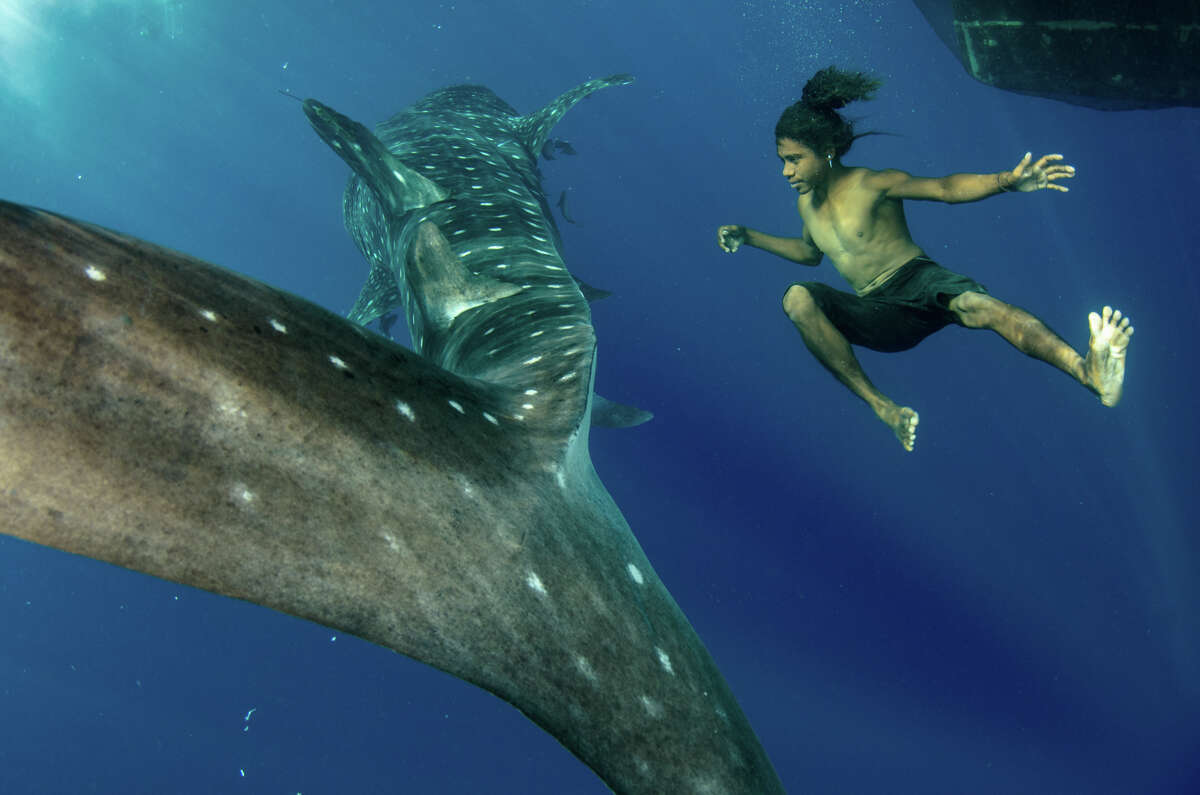 A whale shark and a local fisherman in Cenderawasih Bay, West Papua Indonesia.