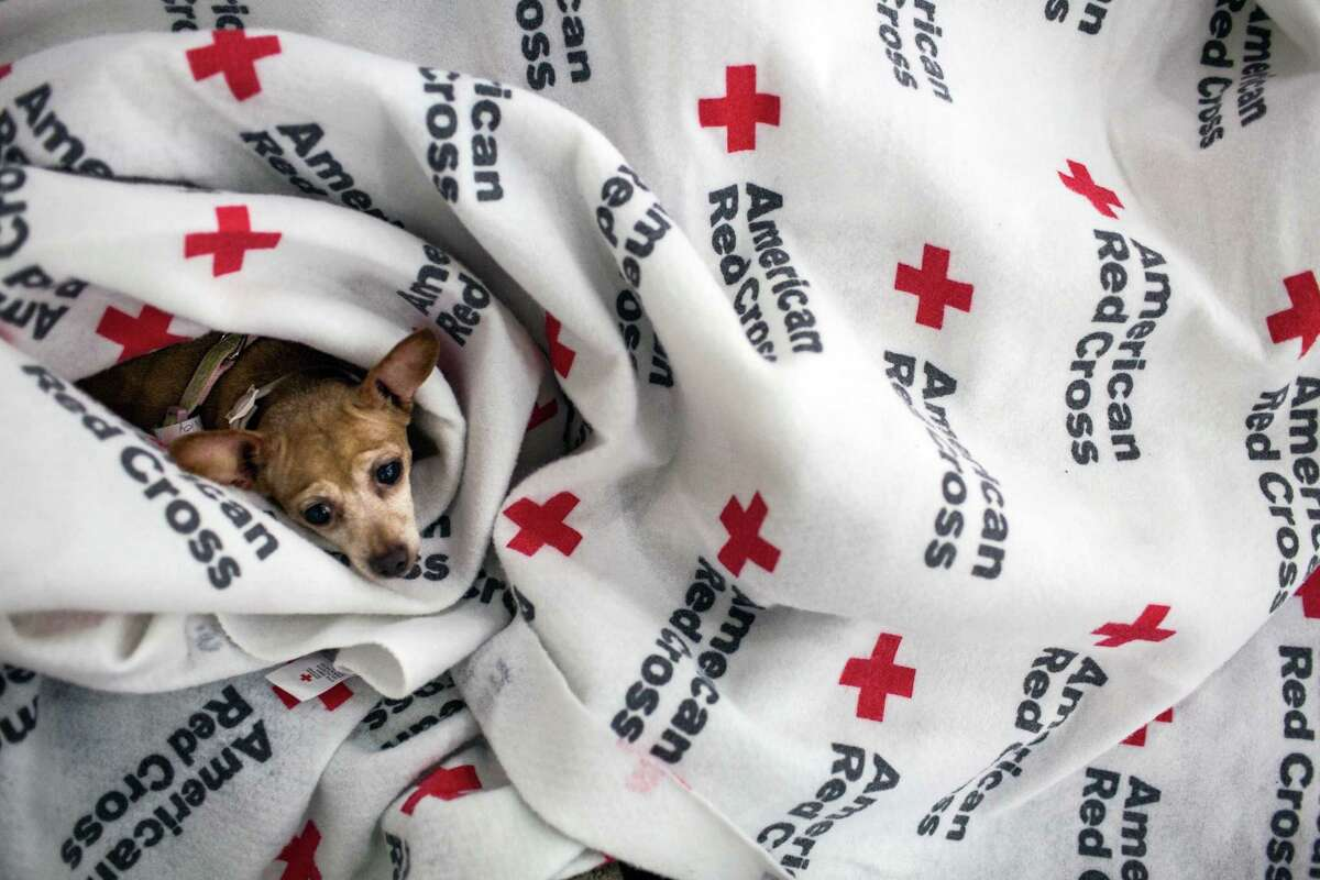 Photos: Pets of Hurricane Harvey Coco the dog is nestled in blankets at the emergency shelter set up in the George R. Brown Convention Center in Houston on Tuesday, Aug. 29, 2017. Tropical Storm Harvey made a second landfall in Louisiana early Wednesday morning, but the emergency was far from over in Texas, where beleaguered residents continued to struggle against rising floodwaters caused by six days of rainfall. (Tamil Kalifa/The New York Times)
