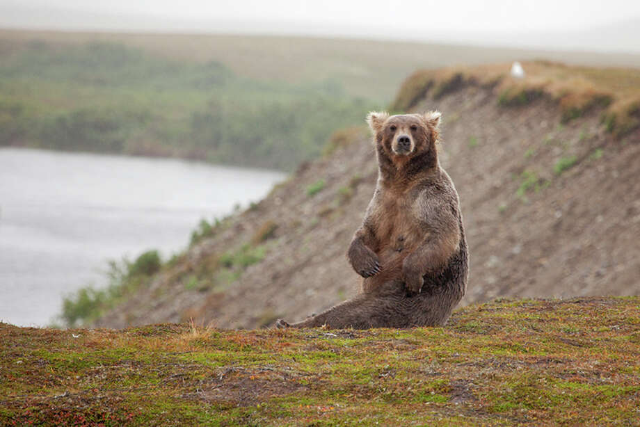 Groups Challenge Decision to Remove Yellowstone Grizzly Protections