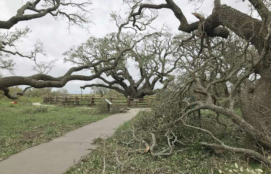 The iconic Big Tree, a 1,000-plus-year-old coastal live oak at Goose Island State Park near Rockport, survived Hurricane Harvey. But Goose Island is one of more than a dozen state parks closed because of storm damage. Dozens more state parks are open and housing more than 3,000 storm evacuees. Photo: Earl Nottingham /Texas Parks & Wildlife / Internal