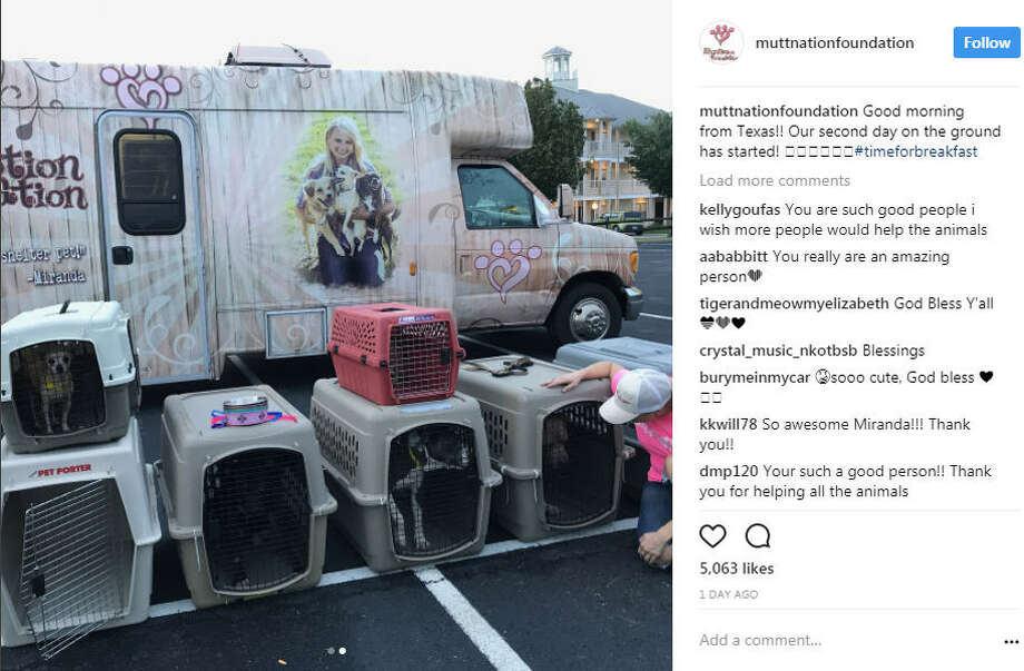 Miranda Lambert's Mutt Nation Foundation has rescued more than 70 pups from flood waters in Texas to Oklahoma. Image source: InstagramSee more pets who have been rescued from Hurricane Harvey so far. Photo: Miranda Lambert And Mutt Nation Foundation