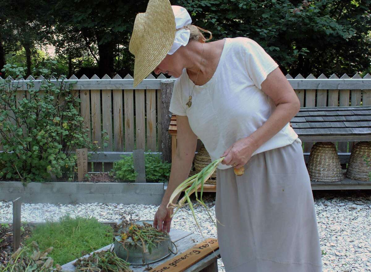 Whitney Vose, a member of the Fairfield Garden Club, does some harvesting at the Ogden House's Colonial Kitchen Garden. In the background are woven skeps, used by colonial residents to house bees.