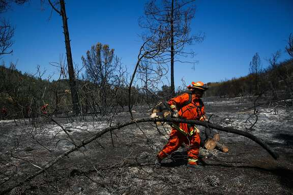 An inmate from the Delta Conservation Camp #8 organizes wood while mopping up the Canyon fire in Napa, Calif., on Tuesday, Aug. 15, 2017.