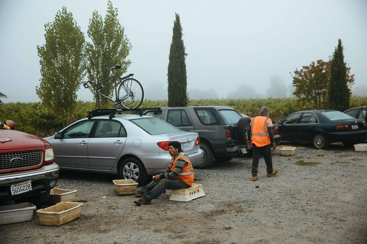Workers take a quick break before continuing the next vineyard block at the Limerick Lane Vineyard in Healdsburg, Calif. Tuesday, August 30, 2017.