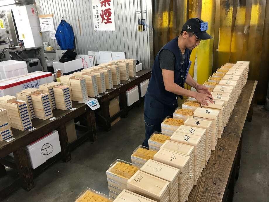 Buyers examine sea urchin up for auction at Tsukiji Market in Tokyo. Photo: Jun Sakai, Courtesy Of Sakasyu