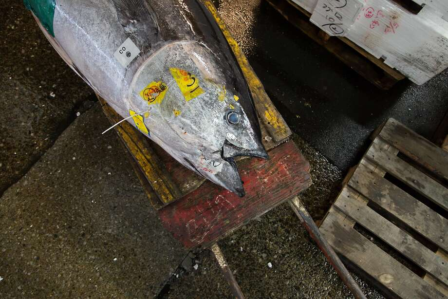 A giant tuna bought at the morning auction at Tsukiji Market in Tokyo waits to be processed and delivered. Photo: Andrew Faulk, Special To The Chronicle