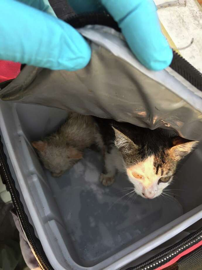 Kittens were left for dead on a boat in San Rafael, according to the Sheriff's Office. Photo: Marin County Sheriff's Office