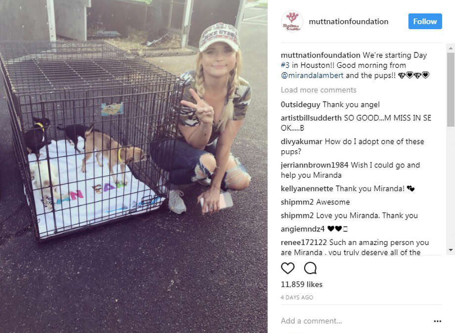 Country singer Miranda Lambert's MuttNation Foundation was in Houston saving hundreds of pets affected by Hurricane Harvey Photo: Instagram