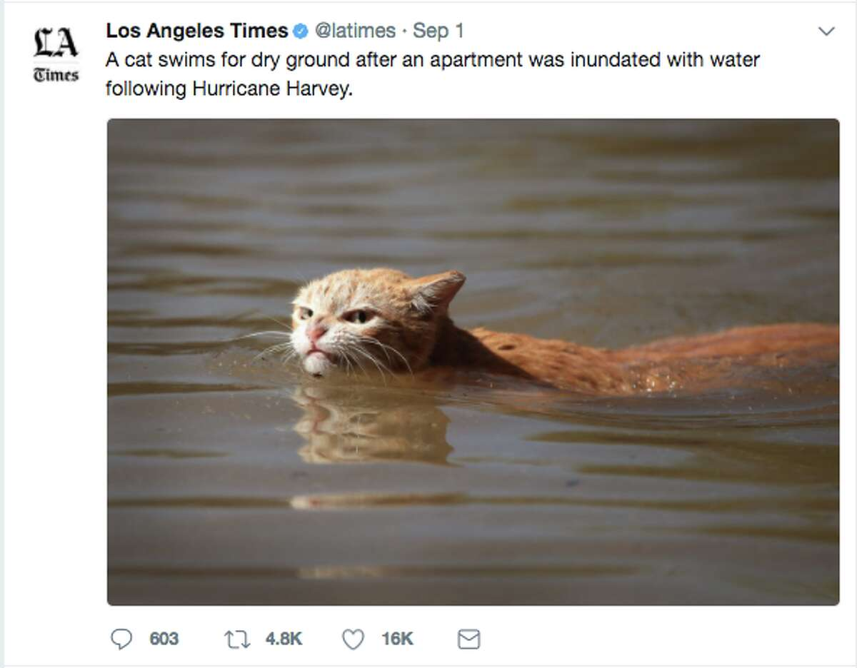 The photo that launched a bunch of angry cat memes.