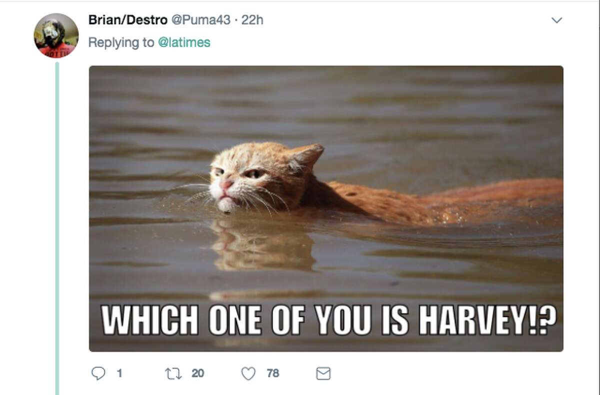 People react with memes and heartfelt concern to the LA Times' photo of a cat swimming in the aftermath of Hurricane Harvey.