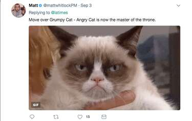 Photo of 'angry' cat in Harvey floodwaters sparks memes, controversy