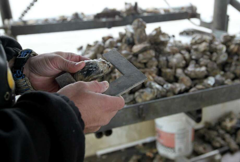 In this Tuesday Dec. 2, 2014 photo, Texas Parks and Wildlife Game Warden Travis Fountain checks a sack of oysters aboard an oyster boat to make sure they are legal, in East Galveston Bay, Texas. State officials have recommended parts of Galveston Bay be closed to oyster harvesting amid concerns over immature mollusks being removed and reefs still recovering from 2008's Hurricane Ike. (AP Photo/The Galveston County Daily News, Jennifer Reynolds) ** MANDATORY CREDIT, NO SALES, MAGS OUT, TV OUT ** Photo: Jennifer Reynolds, MBR / The Galveston County Daily News