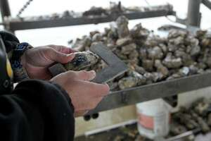 In this Tuesday Dec. 2, 2014 photo, Texas Parks and Wildlife Game Warden Travis Fountain checks a sack of oysters aboard an oyster boat to make sure they are legal, in East Galveston Bay, Texas. State officials have recommended parts of Galveston Bay be closed to oyster harvesting amid concerns over immature mollusks being removed and reefs still recovering from 2008's Hurricane Ike. (AP Photo/The Galveston County Daily News, Jennifer Reynolds) ** MANDATORY CREDIT, NO SALES, MAGS OUT, TV OUT **