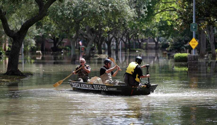 Harris County Constable Precinct 1, Chris Kendrick, along with Houston SPCA's Octavio Gonzalez, and Bon Wilson, go out in a boat at Memorial and Crossroads to rescue a cat, Tuesday, Sept. 5, 2017, in Houston. Photo: Karen Warren, Houston Chronicle / @ 2017 Houston Chronicle