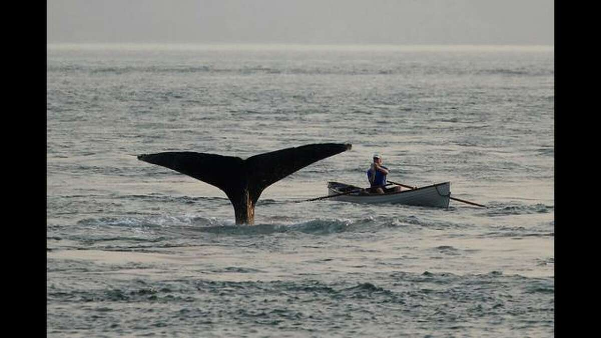 A San Francisco man had an extremely close encounter with a whale while out on the San Francisco Bay in his rowboat.