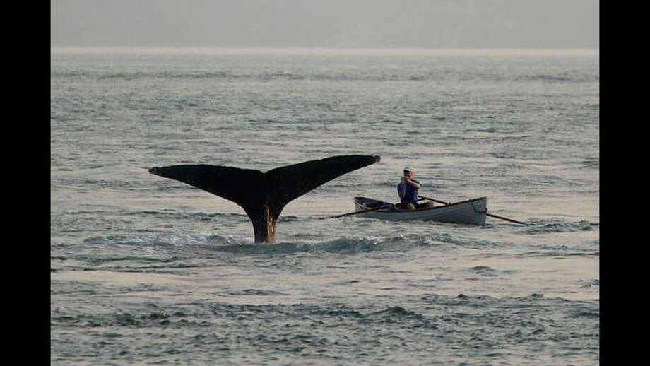 A San Francisco man had an extremely close encounter with a whale while out on the San Francisco Bay in his rowboat. Photo: Maria Lanigan