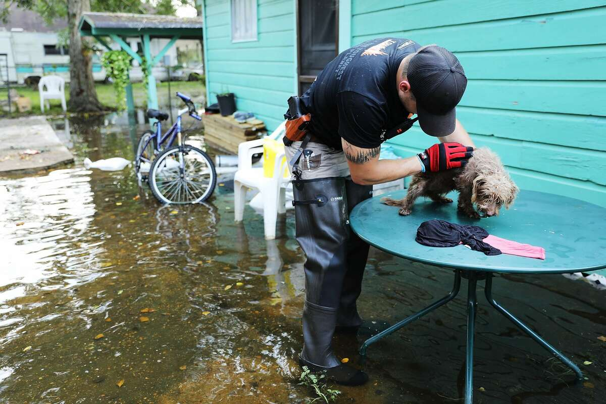 ORANGE, TX - SEPTEMBER 05: Matt Murray, a volunteer with an animal rescue organization, pets a small dog he found abandoned beside a flooded home on September 5, 2017 in Orange, Texas.Thousands of pets and livestock have either run away or been left to fend for themselves after Hurricane Harvey ravaged parts of the state of Texas. (Photo by Spencer Platt/Getty Images)