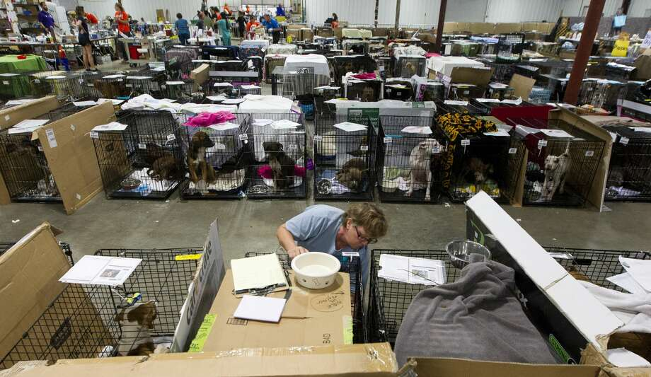 Volunteer Pam Pierce, with National Spare Alliance out of Georgia, checks dog's paperwork to make sure it received various shots and examinations at the Montgomery County Fair Grounds, Wednesday, Sept. 6, 2017, in Conroe. More than 600 animals have gone through the temporary shelter since Tropical Storm Harvey. Photo: Jason Fochtman/Houston Chronicle