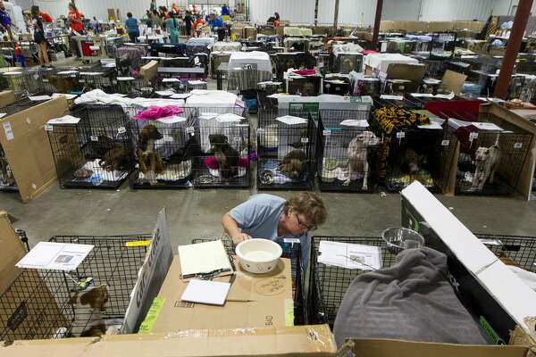 Volunteer Pam Pierce, with National Spare Alliance out of Georgia, checks dog's paperwork to make sure it received various shots and examinations at the Montgomery County Fair Grounds, Wednesday, Sept. 6, 2017, in Conroe. More than 600 animals have gone through the temporary shelter since Tropical Storm Harvey.