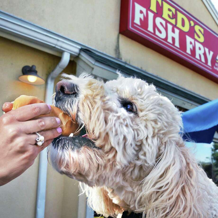 Labradoodle Buddy gets a taste of a hot dog from owner Deanna Deeb-DeBonis at Ted's Fish Fry on Wolf Road Friday Sept. 1, 2017 in Colonie, NY.  (John Carl D'Annibale / Times Union) Photo: John Carl D'Annibale / 20041444A