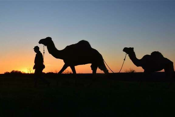 The Texas Camel Corps was created to provide education about the use of camels in the U.S. Army experiment in the 1850s.