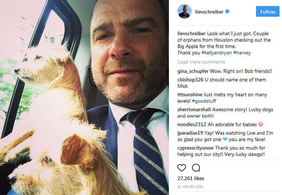 "Liev Schreiber, the star of TV's ""Ray Donovan"" and the Oscar-winning ""Spotlight"" has adopted two puppies that were displaced by Hurricane Harvey in Texas.(Photo: Liev Schreiber on Instagram)See how Houston animals reacted to Houston's recent hurricane adventure.. Photo: Instagram"