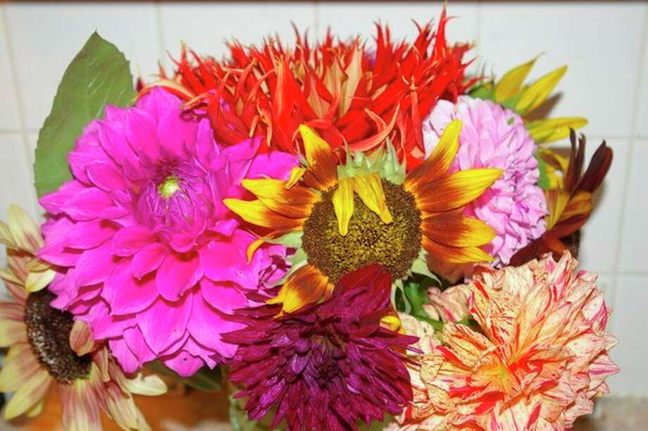 A dahlia bouquet from Dan Draves' garden. (Photo provided)