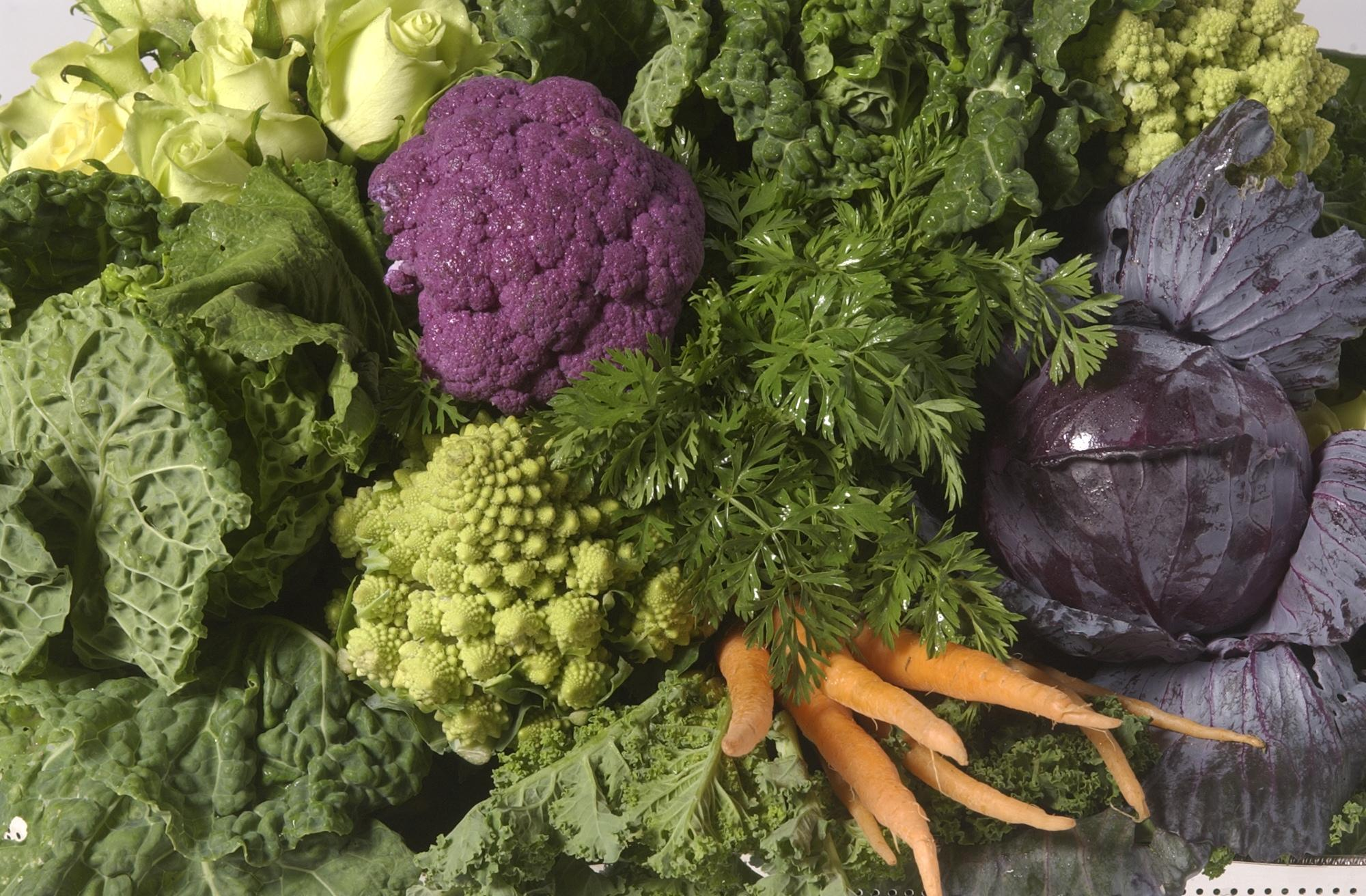 your guide to planting a winter vegetable garden san antonio