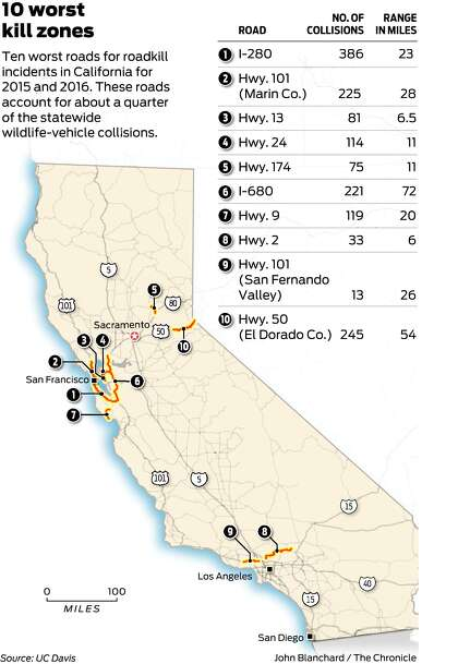 Bay Area highways hot spots for roadkill, report shows
