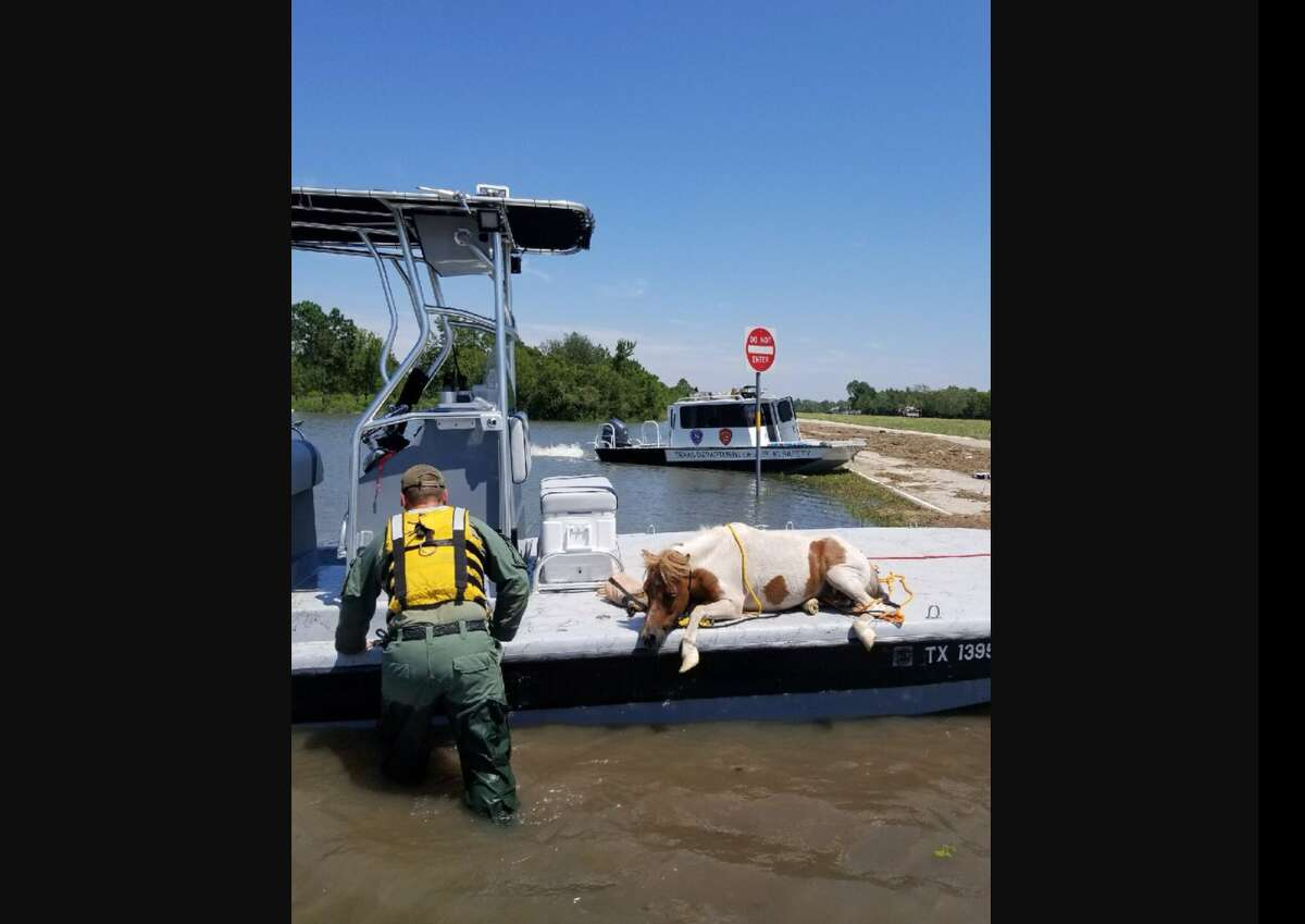 Pets of Hurricane Harvey An exhausted horse was recently rescued from Harvey's floodwaters by Texas DPS troopers. See how pets managed during Harvey.