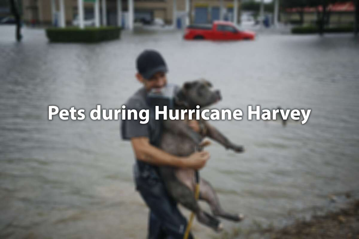 See how pets managed during Harvey