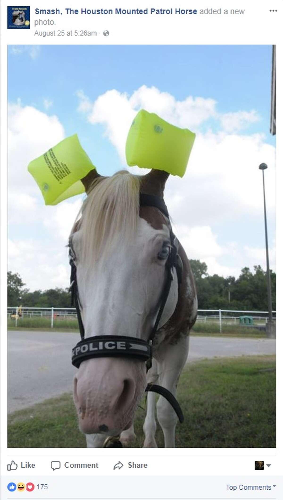 Smash, the Houston Mounted Patrol HorseSmash makes us smile every time.