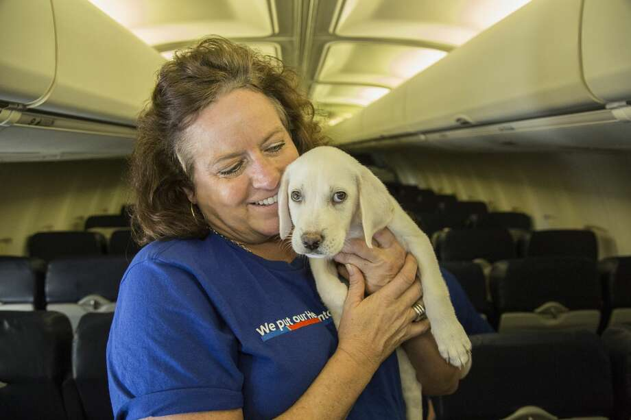Southwest Airlines teamed up with Helen Woodward Animal Center in San Diego on their relief efforts to support Houston local organization, Operation Pets Alive. On Tuesday Southwest flew more than 60 animals that were in Houston shelters to San Diego to relieve strain on the local facilities and allow OPA to make room for family pets whose humans are currently displaced from their homes.See more photos of the cutest flight ever... Photo: Southwest Airlines