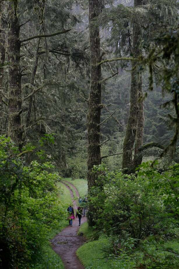 FILE-- Sky Trail junction with Woodward Trail in old-growth rain forest on Inverness Ridge in wilderness interior of Point Reyes National Seashore, near where a fatal plane crash occurred Thursday. Photo: Tom Stienstra, The Chronicle