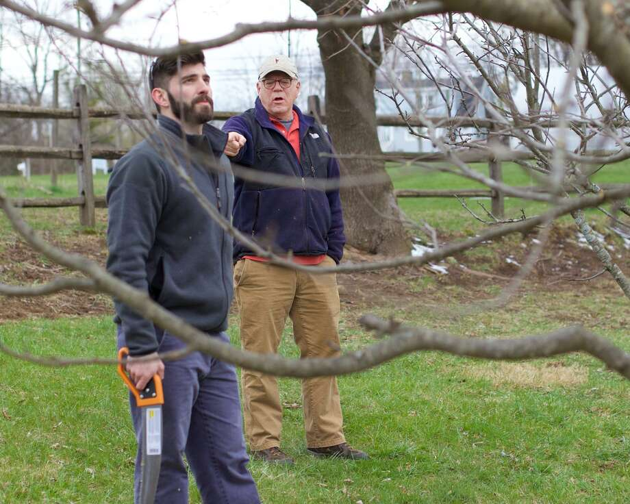 Mark Makin and Jason O'Connor, front, give direction to members of the New Milford Youth Agency on how to prune the apple trees. The New Milford Youth Agency is once again running and managing Sullivan Farm at 140 Park Lane in New Milford, CT. Photo: Trish Haldin / For Hearst Connecticut Media / The News-Times Freelance