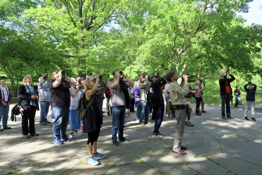 Birders join Birding Bob, a.k.a. Robert DeCandido, for a walk through Manhattan's Central Park. Photo: Photo By Audrey E. Hoffer For The Washington Post. / For The Washington Post