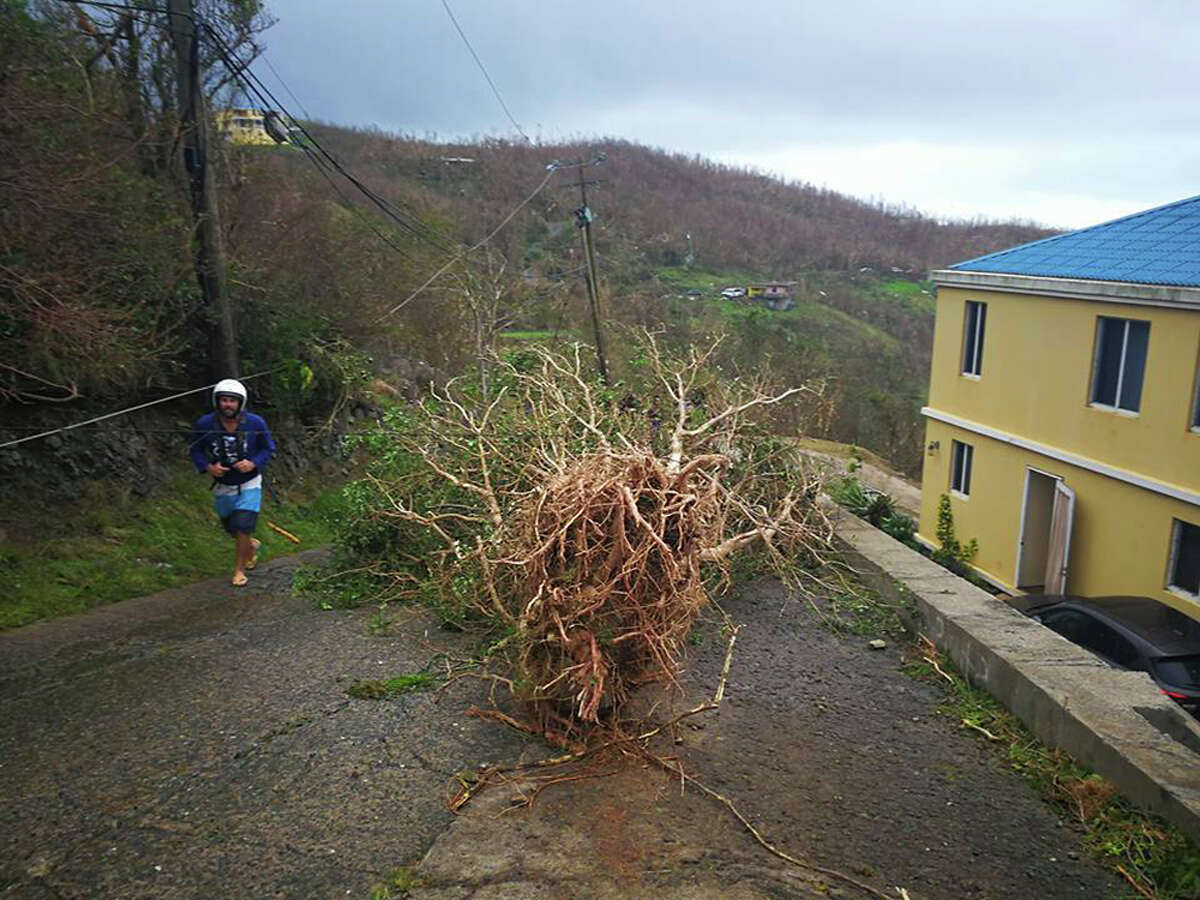 In this Thursday, Sept. 8, 2017 photo, a man walks past an uprooted tree sitting in the middle of a road in the aftermath of Hurricane Irma in Tortola, in the British Virgin Islands. Irma scraped Cuba's northern coast Friday on a course toward Florida, leaving in its wake a ravaged string of Caribbean resort islands strewn with splintered lumber, corrugated metal and broken concrete. (Jalon Manson Shortte via AP)