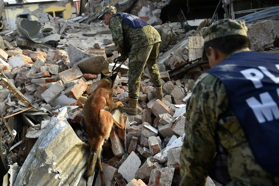 Soldiers with specially trained sniffer dogs search for survivors in the earthquake ruins in Juchitan, Mexico. Photo: PEDRO PARDO, AFP/Getty Images