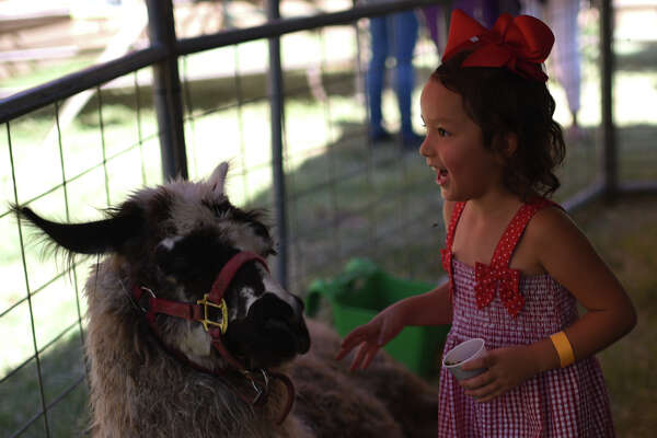 Cruz Aguilar, age 4, hangs out with a llama in the Whitley Acres petting zoo at Septemberfest on Sept. 9, 2017, at the Museum of the Southwest. James Durbin/Reporter-Telegram