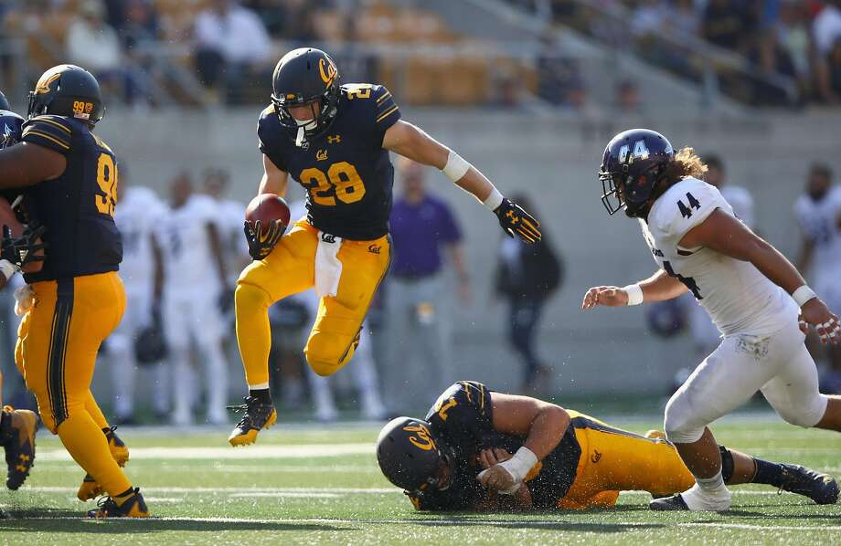 Cal running back Patrick Laird (28), a junior who earned a scholarship this season, runs past Weber State defensive lineman Cardon Malan Wildcats on his way to three touchdowns and 191 yards. Photo: Ezra Shaw, Getty Images