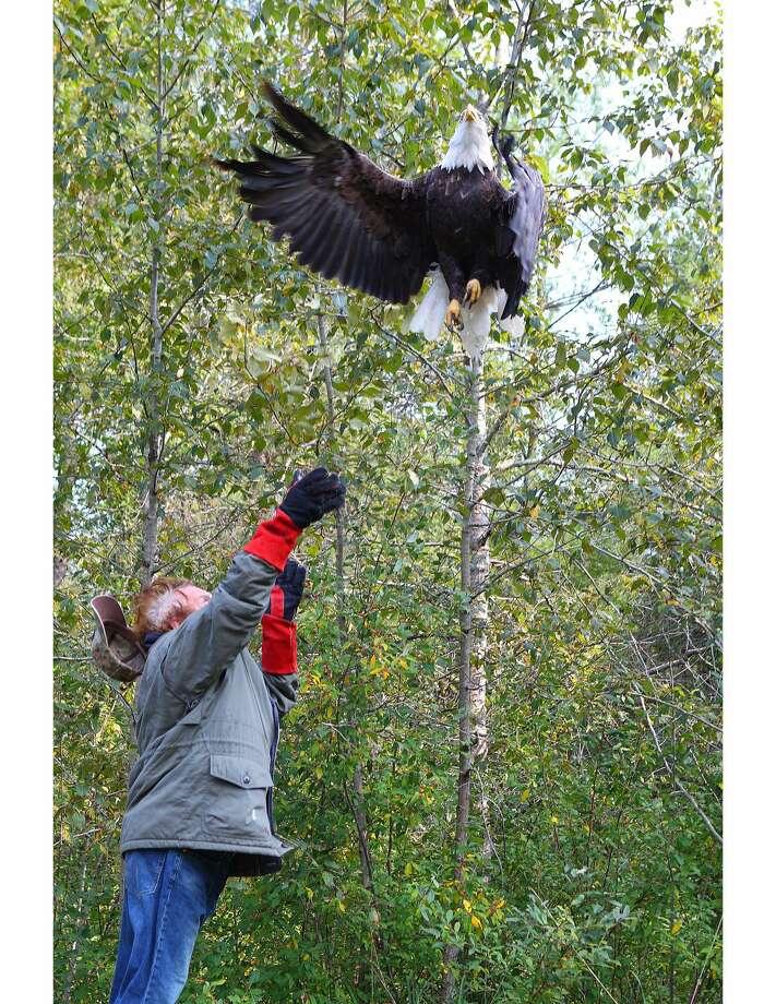 Joe Rogers releases eagle. Photo: Tim Kaufman