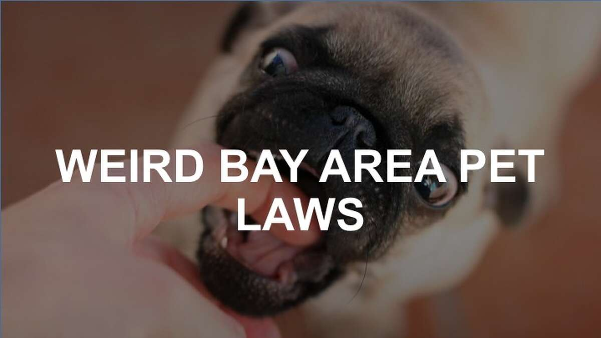 San Franciscans love their furry friends as much as anyone. But you might want to keep an eye out for these funky regulations.