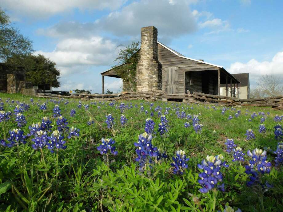 Now is the time to plant wildflowers. Select seeds for individual flowers such as bluebonnets, poppies, coreopsis, Mexican hat, prairie verbena and wine cup or use a mix of different varieties. Photo: Molly Glentzer /Houston Chronicle