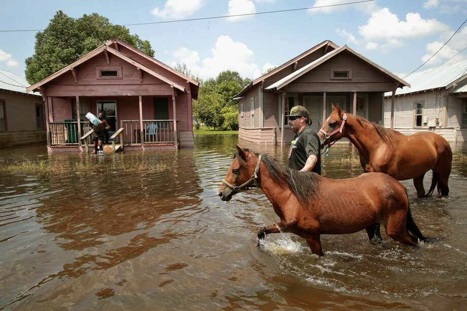 Photos: Pets of Hurricane HarveyA group of horses separated from their owners during Harvey is finding a temporary home in northwest Houston until they can be reconnected with their owners or adopted.See how the pets of Houstonians and Texans managed during Hurricane Harvey. Photo: Scott Olson/Getty Images