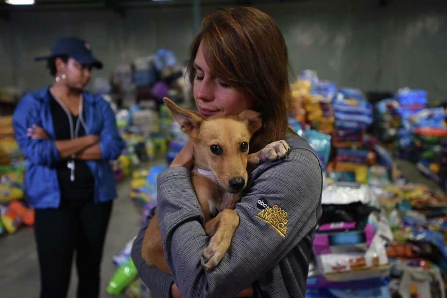 Go to Best Friends' website to search a database of found pets.  Photo: Molly Wald